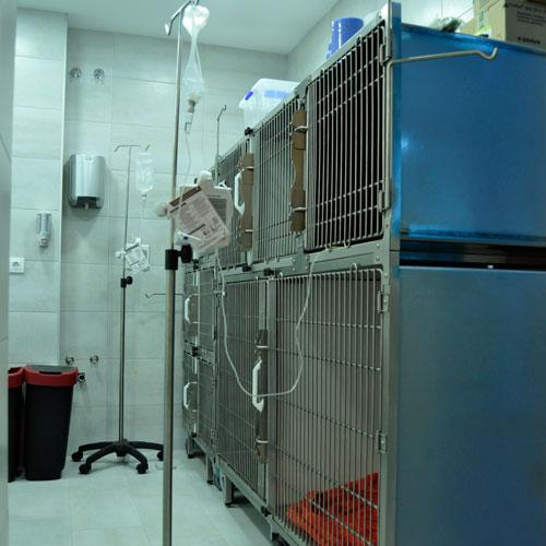 Sala de hospitalización- Clínica veterinaria Jardín de la Reina