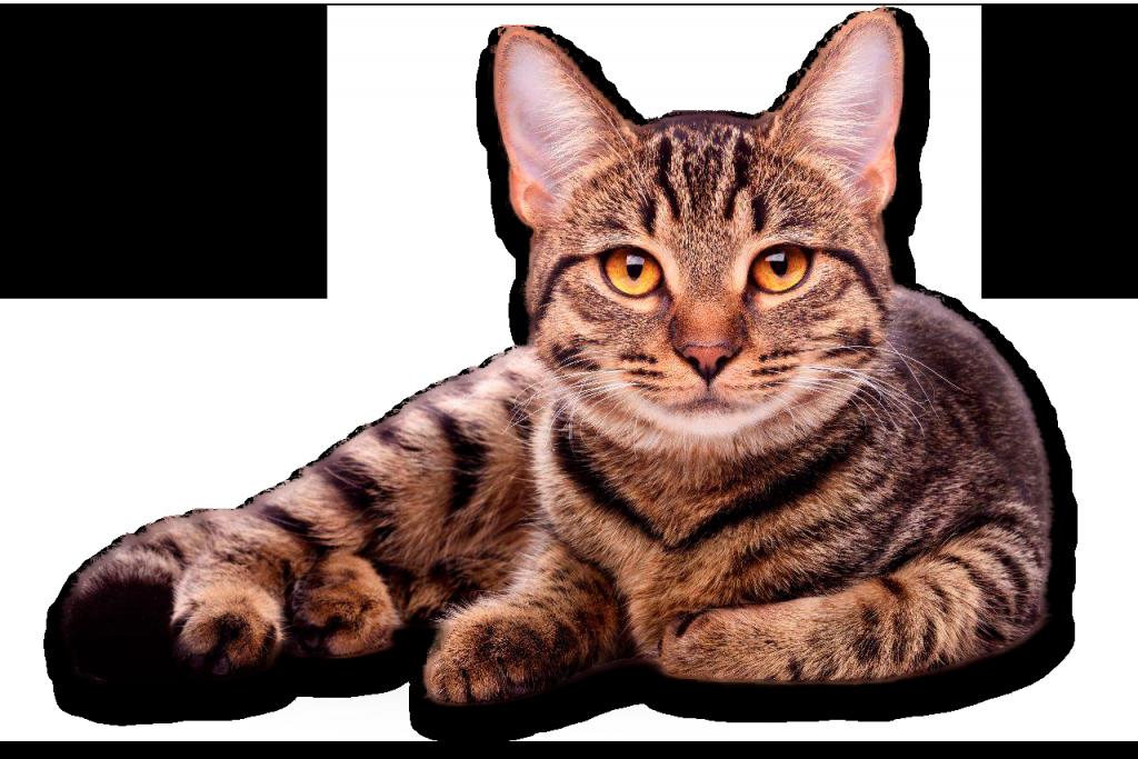diagnostico perro gato clinica veterinaria jardin reina granada