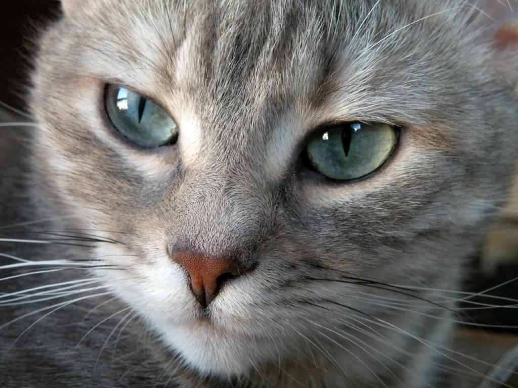 ojos-azules-9