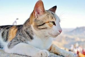 alimentacion-pienso-gatos