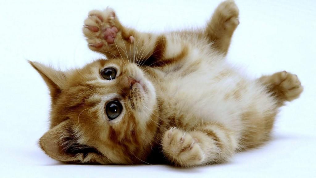 por-que-los-gatos-ronronean