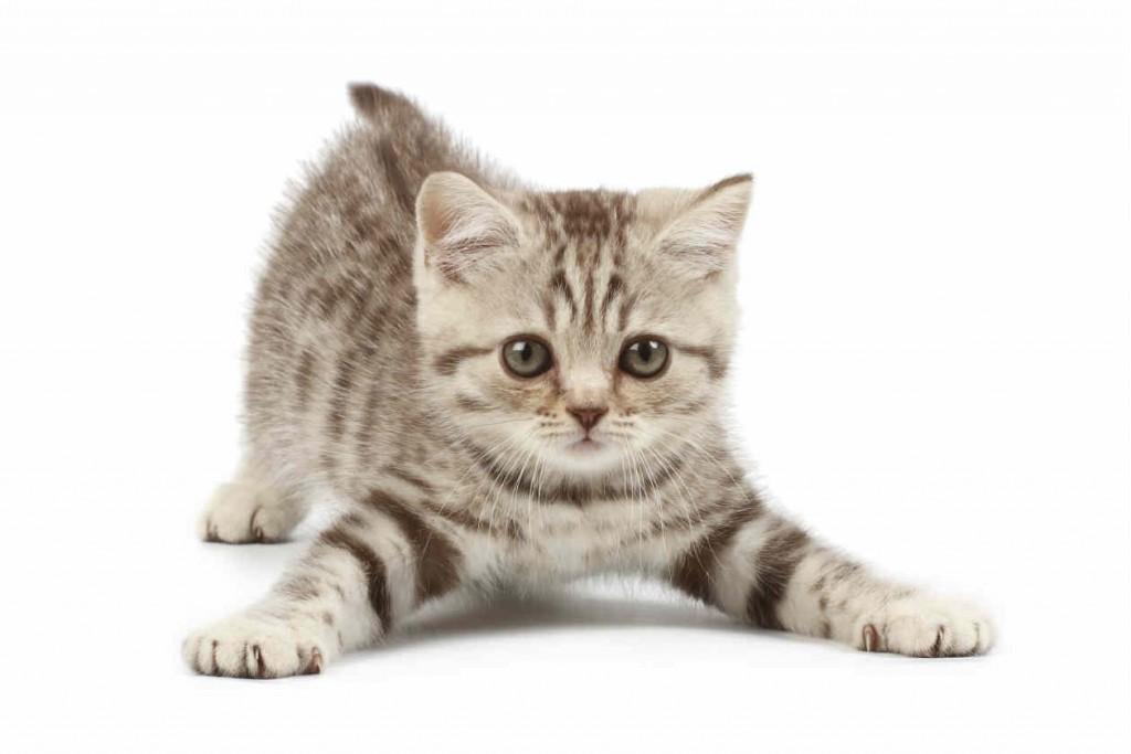 Los-gatos-nos-ignoran-1