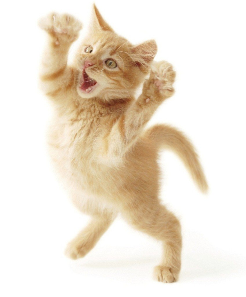 gatos-locos-comportamientos-extranos-gatos