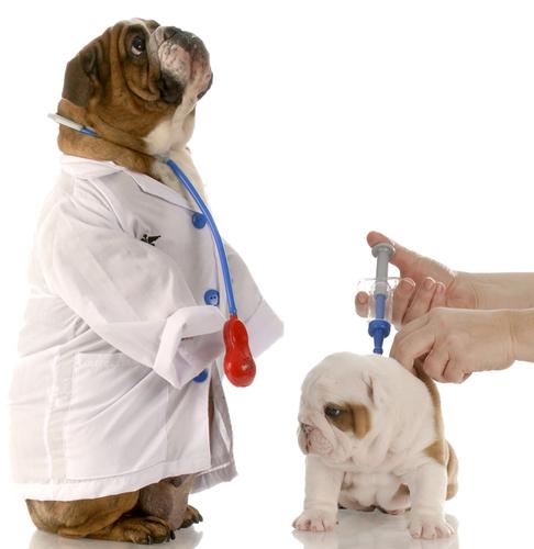 vacunacion-perros