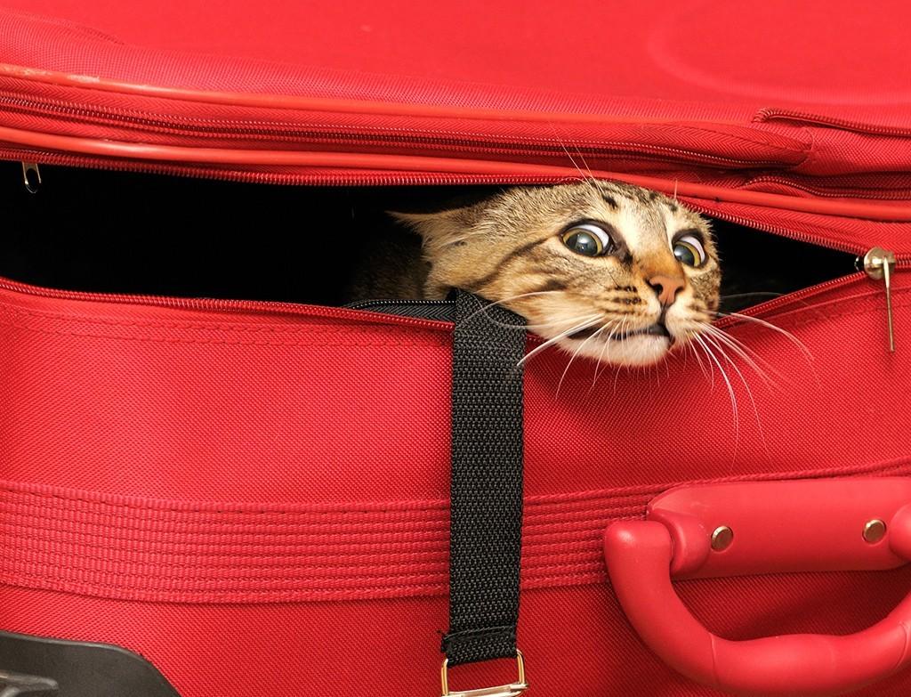 maleta-con-gato-dentro2-1024x783