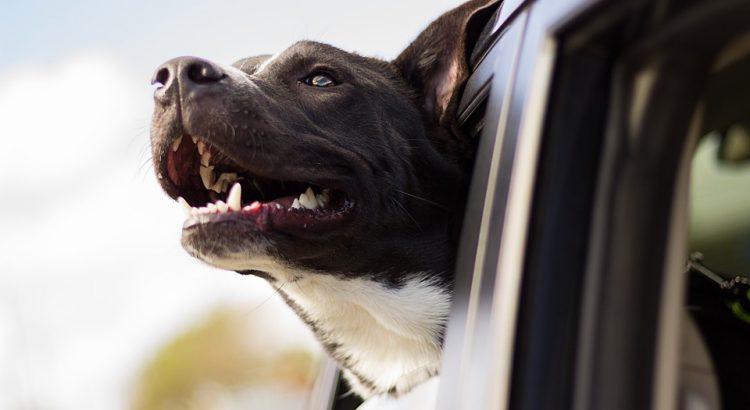 perro-coche-750x410